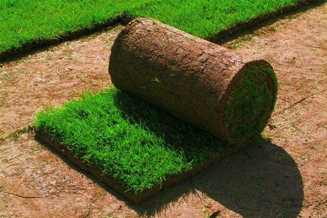 Выбираем газон: посевной или рулонный?