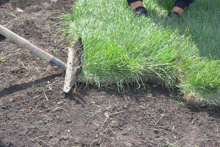 Газонная трава - когда сажать газон на даче