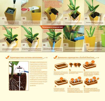 Комнатные растения ядовитые