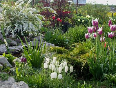 Растения для садовых клумб
