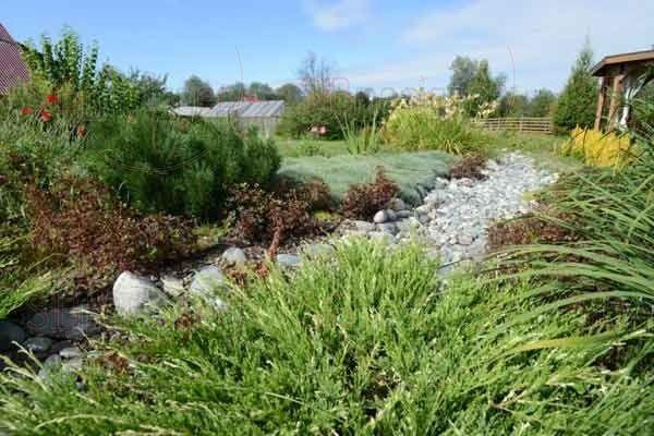 Слева из окатыша выложен сухой ручей, по берегам которого расположились лилейники и ирисы.