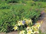 Живописный сад