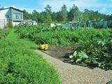 Уникальные уголки сада