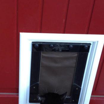 Энергоэффективная дверь для питомца