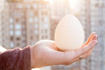 Взять с собой яйцо