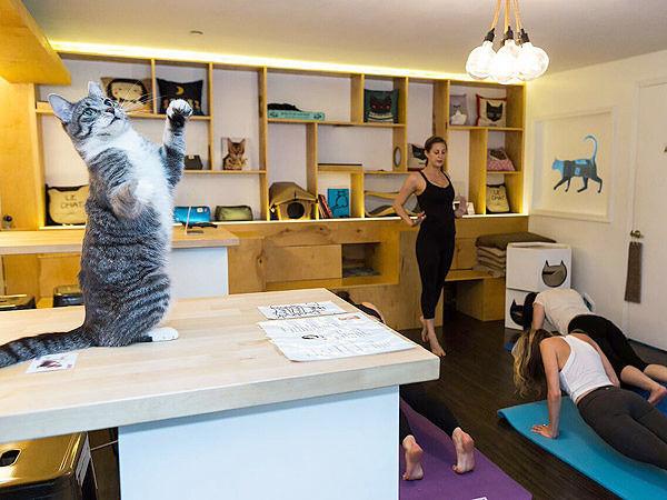 йога в кафе с котами