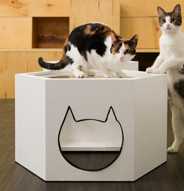 кафе для котов